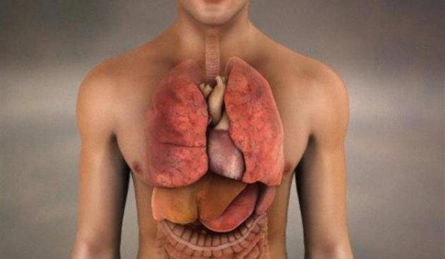 Vücumuzda yeni bir organ var