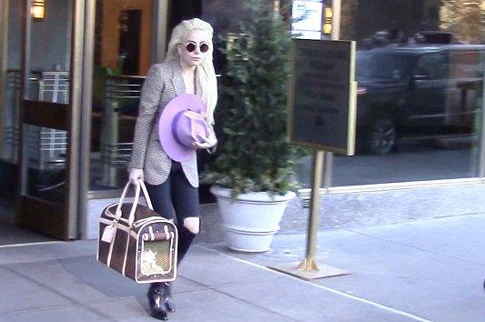 Lady Gaga köpeği için 8 bin liralık çanta aldı