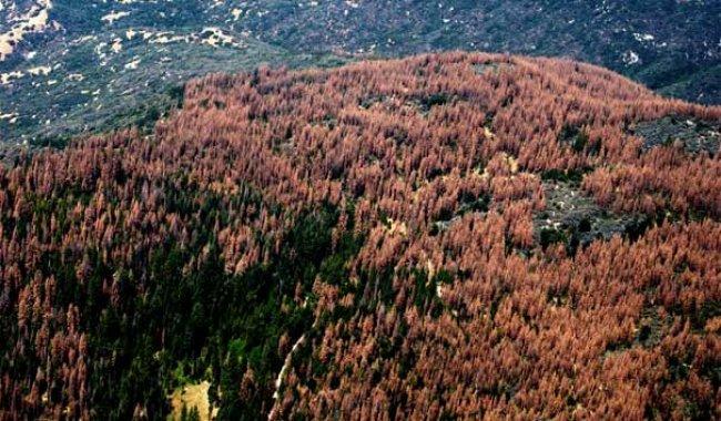 Milyonlarca ağaç yok oldu!