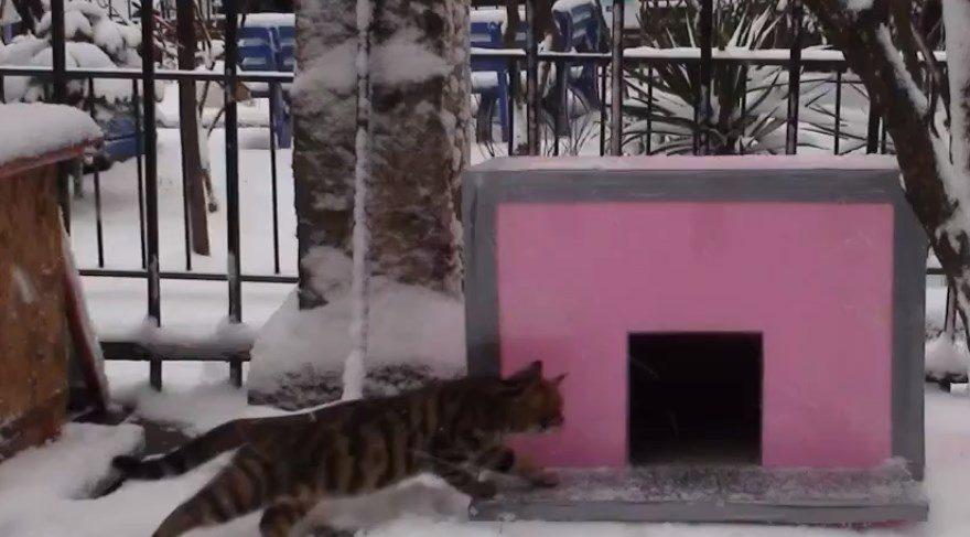 Kadıköy'de kedi evi cinayeti