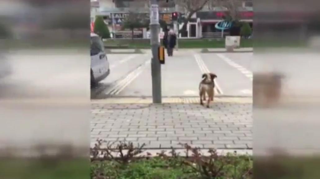 Köpekten insanlık dersi!