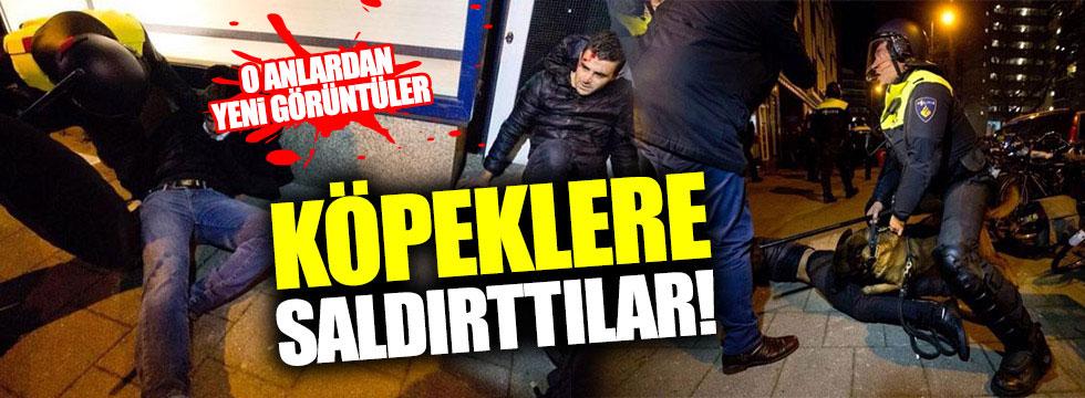 Hollanda polisleri köpeklerle saldırdı!