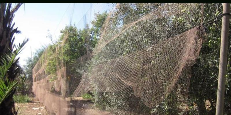 Kıbrıs'taki, İngilizlerden kuş katliamı