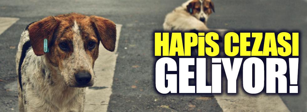 Sokak hayvanlarını zehirleyene 'hapis' cezası