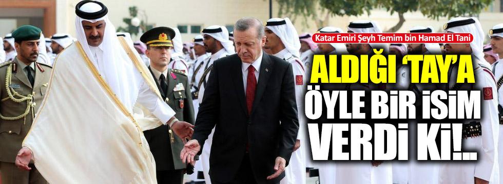 Katar Emiri aldığı taya 'Erdoğan' adını verdi