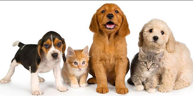 Pet Shop'larda kedi ve köpek satılamayacak