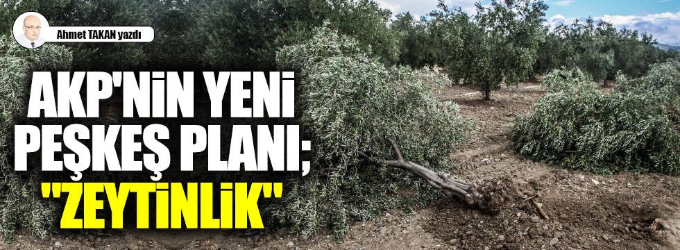 """AKP'nin yeni peşkeş planı; """"Zeytinlik"""""""