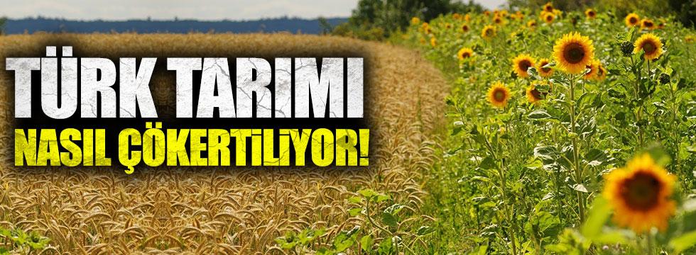 Türk tarımı nasıl çökertiliyor !