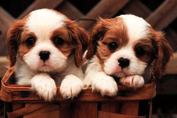 Petshop'larda evcil hayvan satışı sürecek mi?