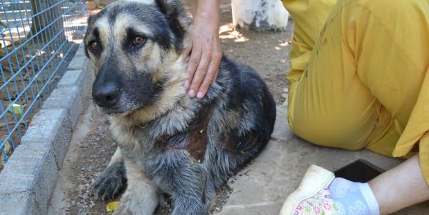 Köpeğe işkencenin 'bedeli' 300 lira!