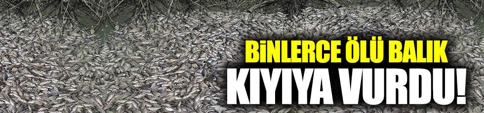 Tekirdağ'da binlerce ölü balık karaya vurdu!