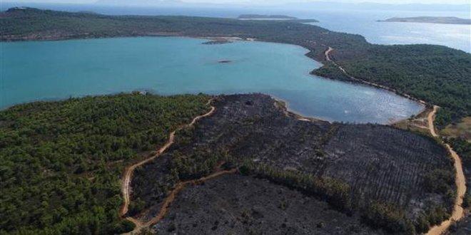 Ayvalık'ta yanan ormanlık alan böyle görüntülendi!