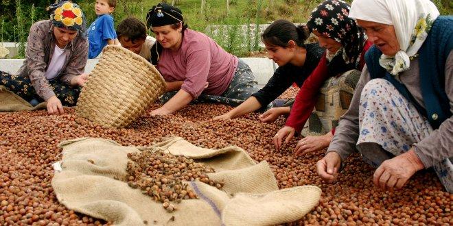 Üreticiden 10 liraya alınan fındığın kilosu, rafta 60 lira!