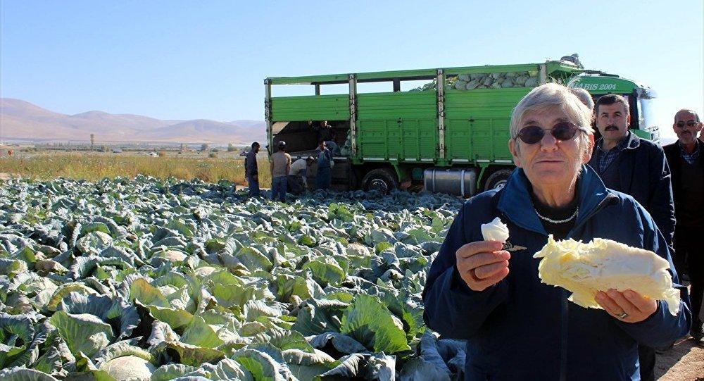 Dünyanın en sağlıklı yiyeceği lahana