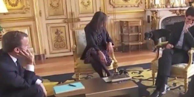 Macron'un köpeği canlı yayında öyle bir şey yaptı ki...