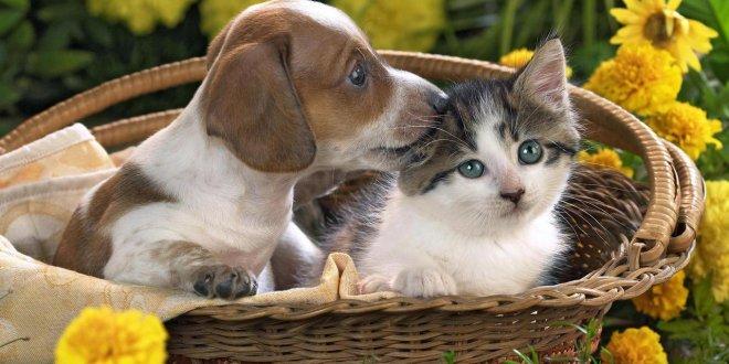 Hayvanları koruma yasası niye çıkmıyor?