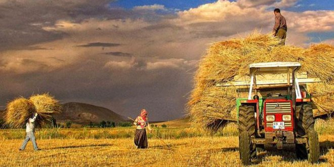 İktidar tarımı 15 yılda  çökertti