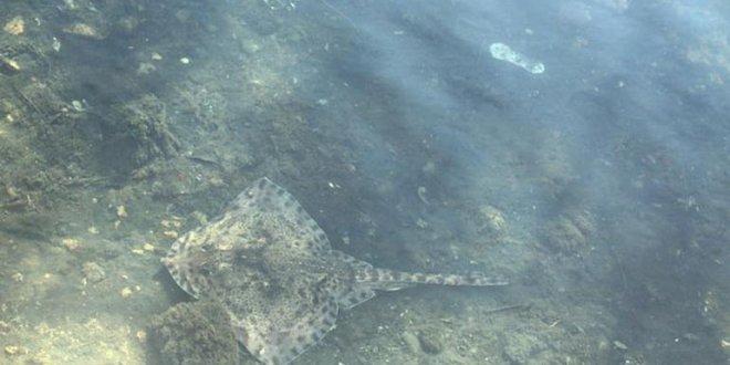 Maltepe'de deniz canlıları karaya vurdu