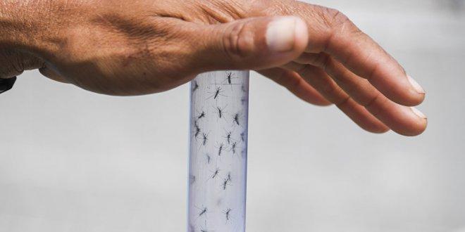 Rusya'dan 'Türkiye'de Zika virüsüne rastlandı' uyarısı