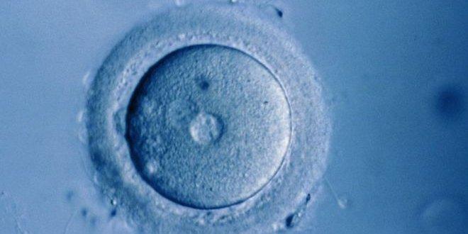 Laboratuvar ortamında insan yumurtası büyütüldü