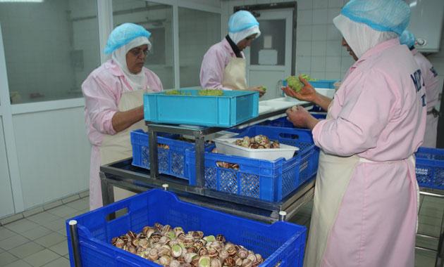 Türkiye'den Uzak Doğu'ya salyangoz ihracatı