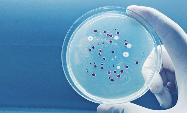 Yeni bir antibiyotik familyası keşfedildi