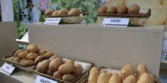 Yerli patates ihaleyle satışta