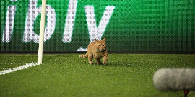 Beşiktaş-Münih maçının adamı 'kedi' seçildi