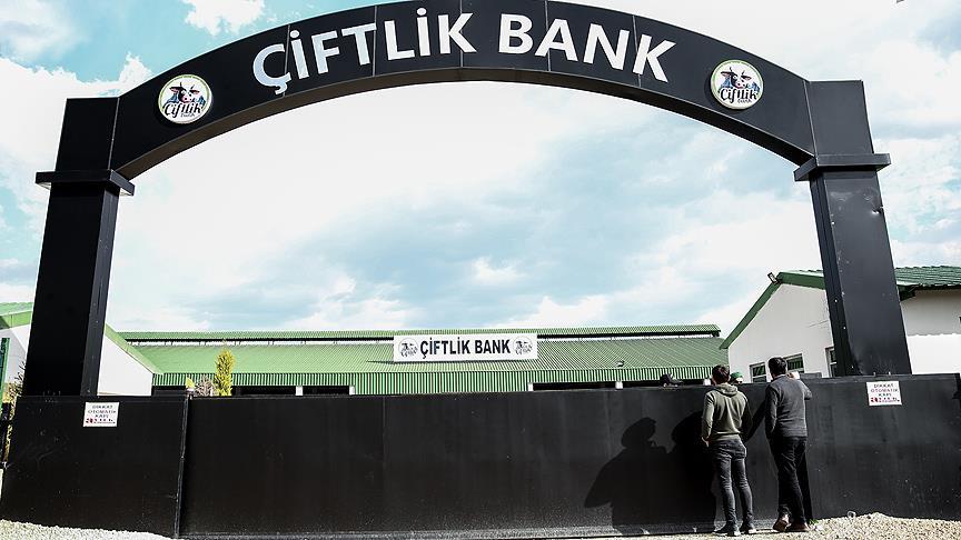 Çiftlik Bank firarisi Türkiye'ye getirildi