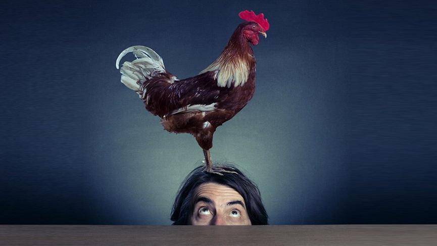 Tavuk-insan üretildi