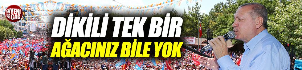"""Erdoğan, """"Dikili tek bir ağacınız bile yok"""""""