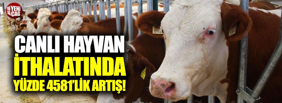 Canlı hayvan ithalatında yüzde 4581'lik artış