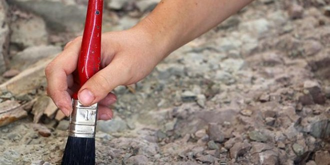 Meksika'da yeni dinozor türü keşfedildi