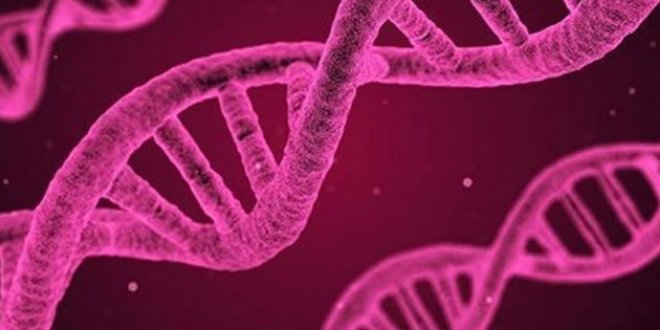 Ucuza maliyetli hızlı DNA sentezleme yöntemi geliştirildi