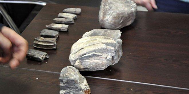 2 milyon yıllık mamut fosilleri tesadüfen bulundu