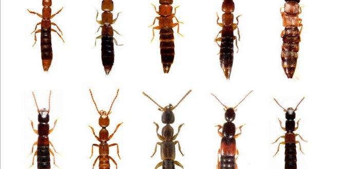 Anadolu'da 20 yeni böcek türü bulundu