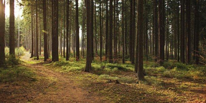 Orman arazileri imara açılıyor