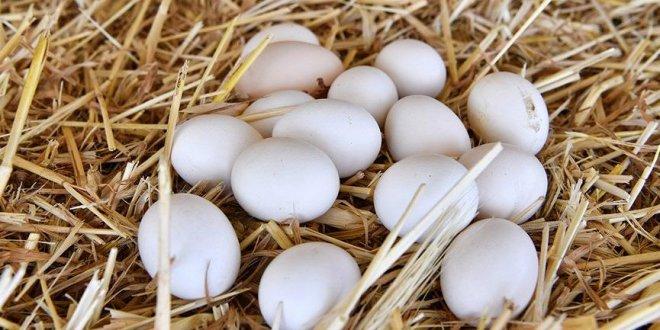 Yumurtaya büyük zam