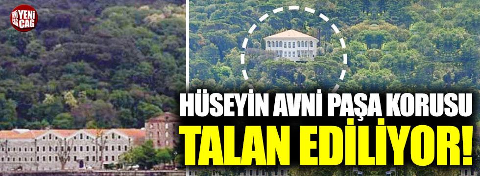 Hüseyin Avni Paşa Korusu talan ediliyor!