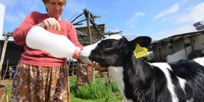 Süt üreticilerinin zam isyanı