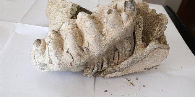 Yozgat'ta 8 milyon yıllık fosil
