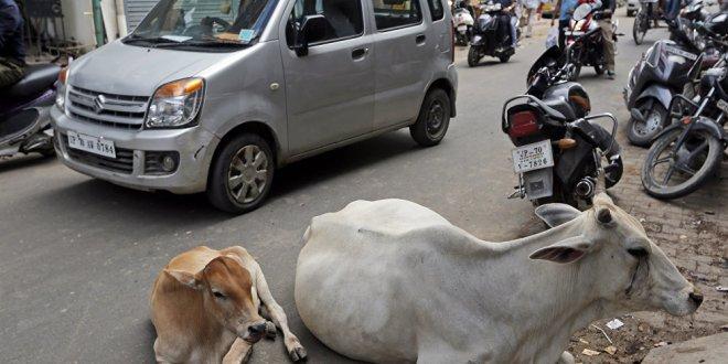 Hindistan'da bir Müslüman inek yüzünden linç edildi