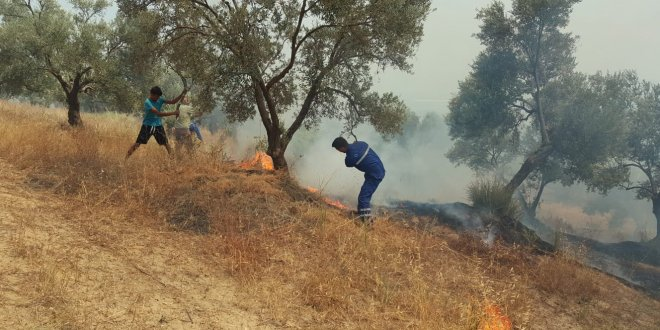 Aydın'da zeytinlik alan yandı