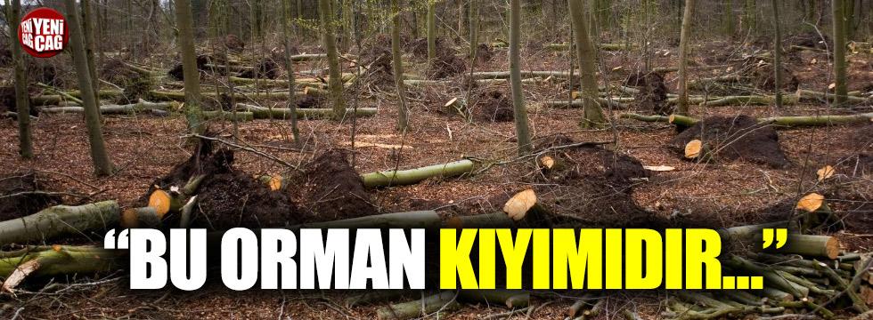 Çorlu'da ağaç katliamı iddiası