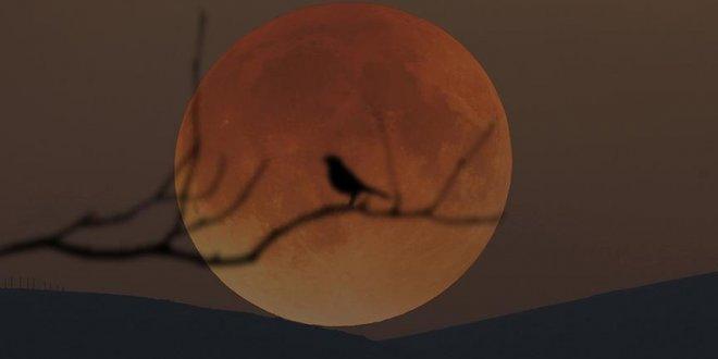 En uzun 'Kanlı Ay' tutulması cuma günü yaşanacak