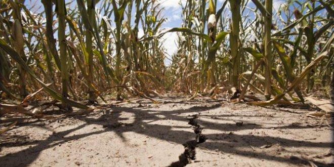 İnsanlık 2018 yılı için doğal kaynakları tüketti
