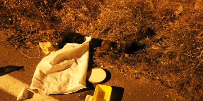 Köpekleri çuvala koyup ölüme terk ettiler