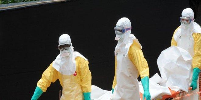 Yeni bir tür Ebola virüsü keşfedildi