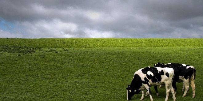 Çiğ süt fiyatlarında kriz