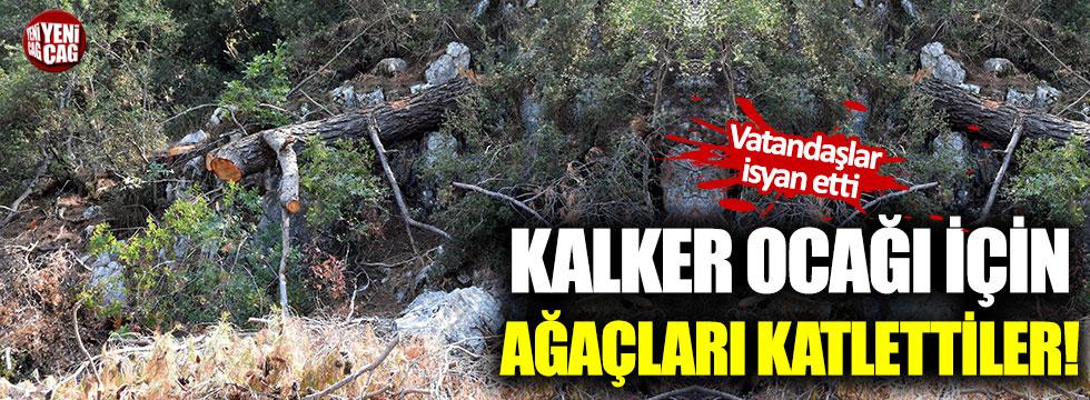 Vatandaşlar ağaçların kesilmesine isyan etti!